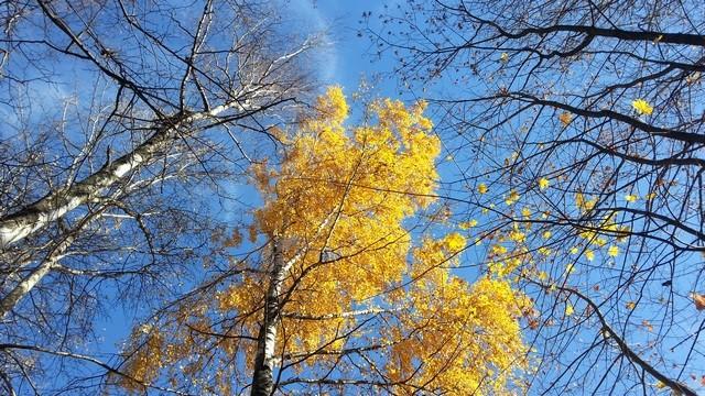 Золотая осень. Видеоэтюд