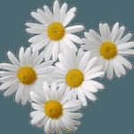 День Петра и Февронии в Саввинской Слободе