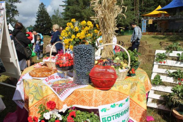 Фестиваль стола в Захарово 4