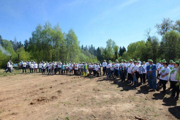 В сельском поселении Ершовское посадили лес Победы!
